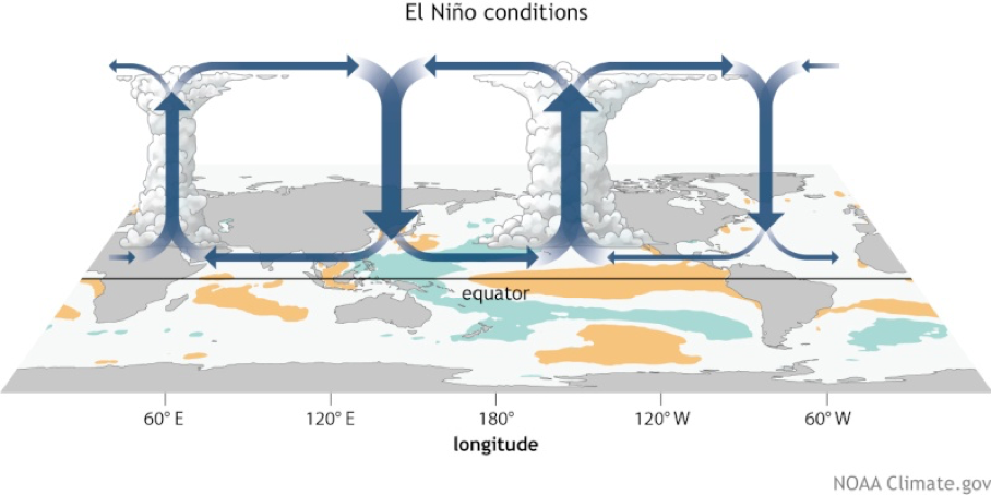 El Nino Circulation